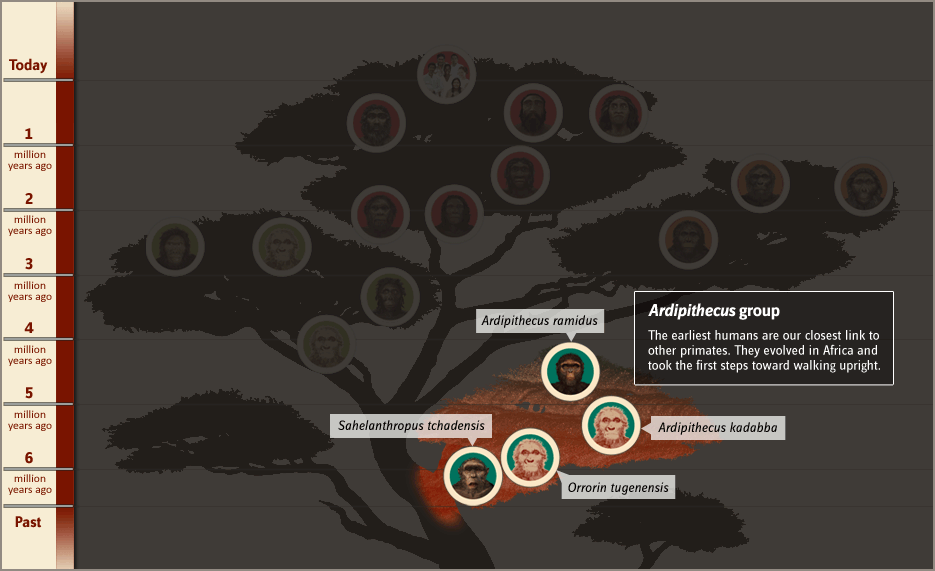 Ardipithecus group background mouseover image.