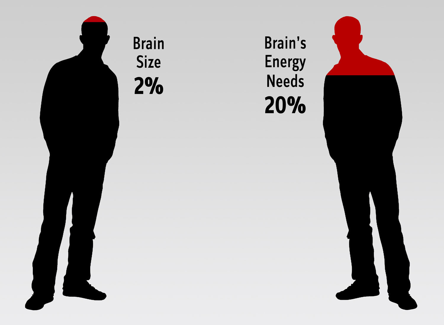 Brains the smithsonian institutions human origins program graphic of silhouettes of two men and text brain size 2 and brains energy ccuart Images