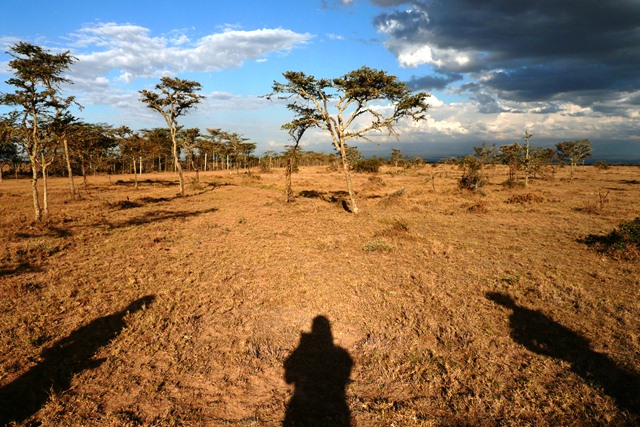 Landscape of Ol Pejeta, Kenya.