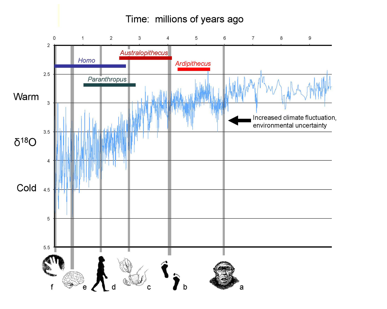 Climate Effects on Human Evolution