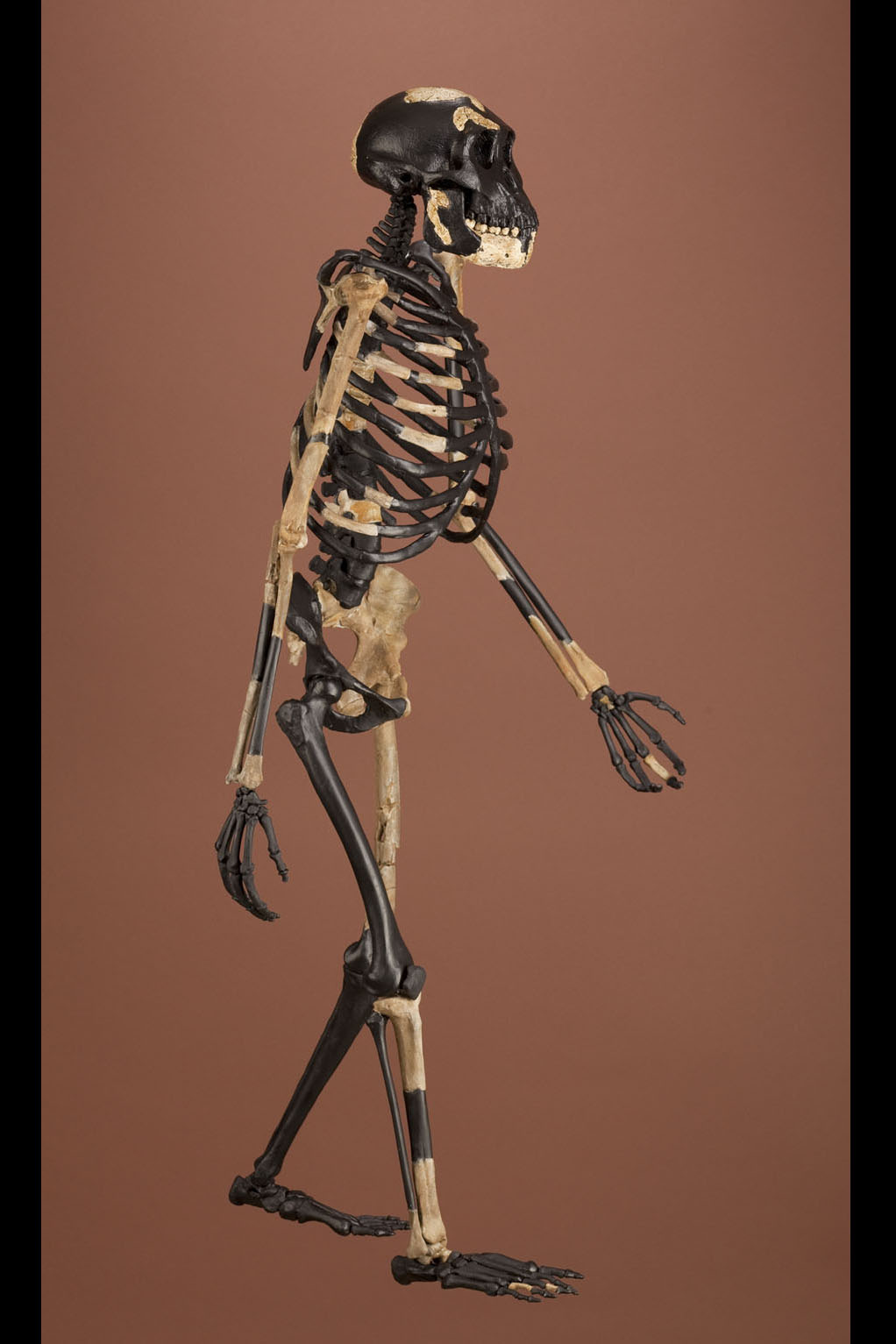 Bodies The Smithsonian Institutions Human Origins Program