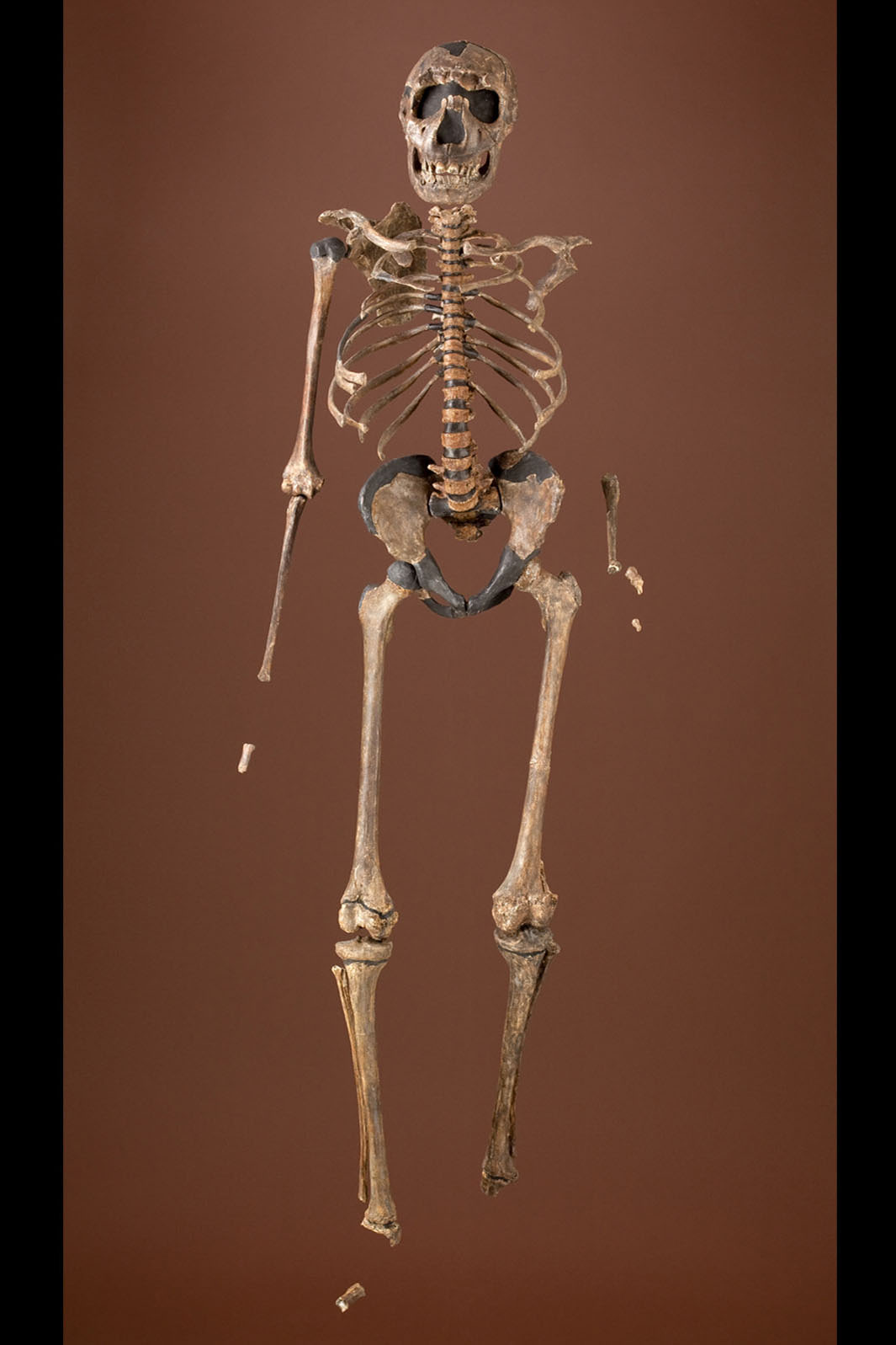Bodies | The Smithsonian Institution's Human Origins Program