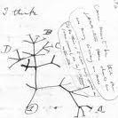 Darwin - Tree of life