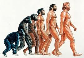 picture of the evolution from ape to modern day human