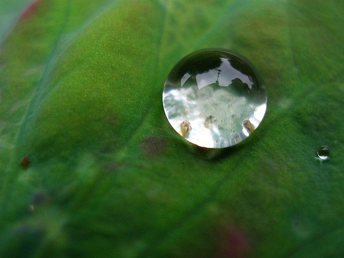 A reflective drop of water on a green leaf.