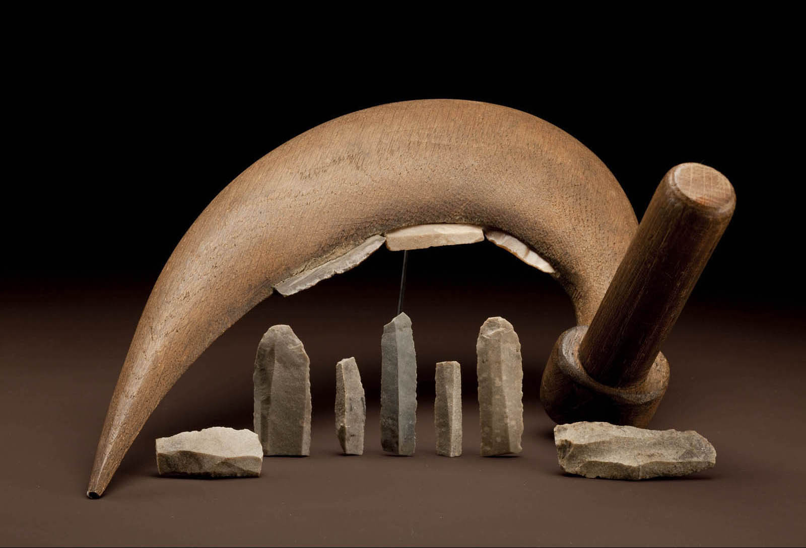 Technologies enabling plant and animal domestication, as seen in by these stone sickle blades from Dynastic Egypt and Ali Kosh, Iran, represent a turning point of human interaction with the environment. Image courtesy of Chip Clark, Smithsonian Institution.