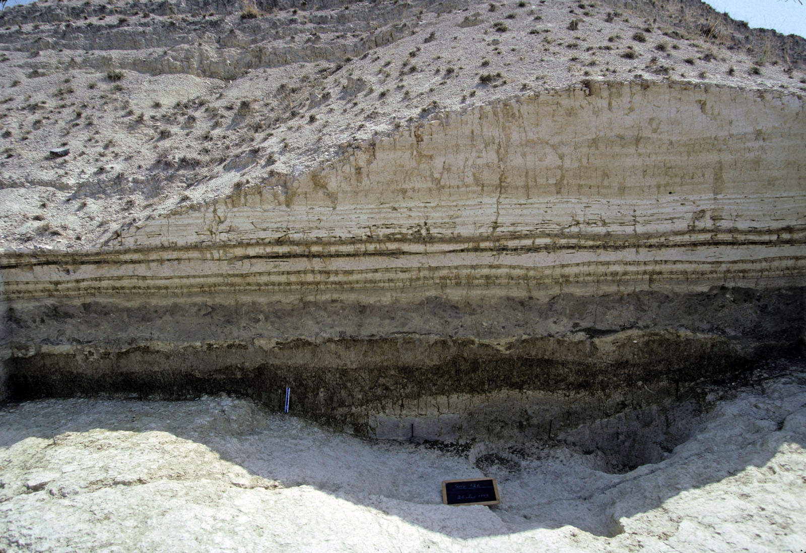 Upper Member 1 paleosol (thick, lower brown layer), which can be traced for several kilometers, provides chemical evidence of a broad grassland 990,000 years ago. Image courtesy of Chip Clark, Smithsonian Institution.