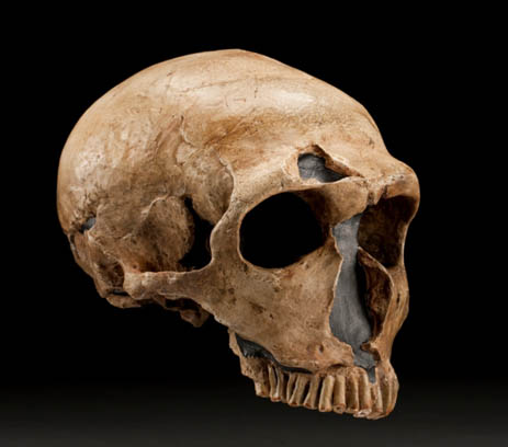 Neanderthal Fossilized Skull from La Ferrassie, France