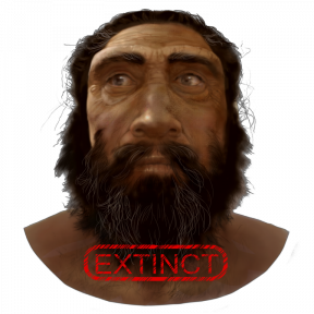Homo neanderthalensis becomes extinct. Image courtesy of Karen Carr Studio.