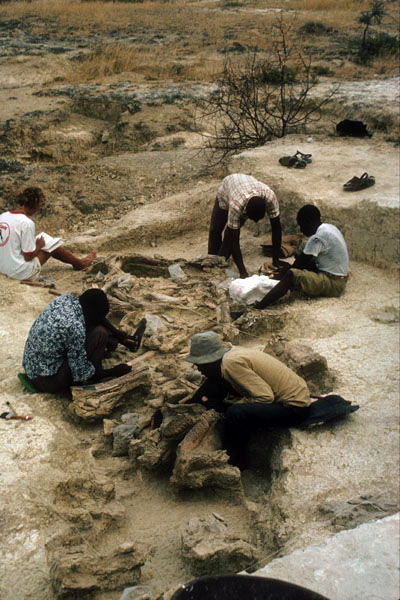Excavation of the elephant butchery site. Image courtesy of Richard Potts, Smithsonian Institution.