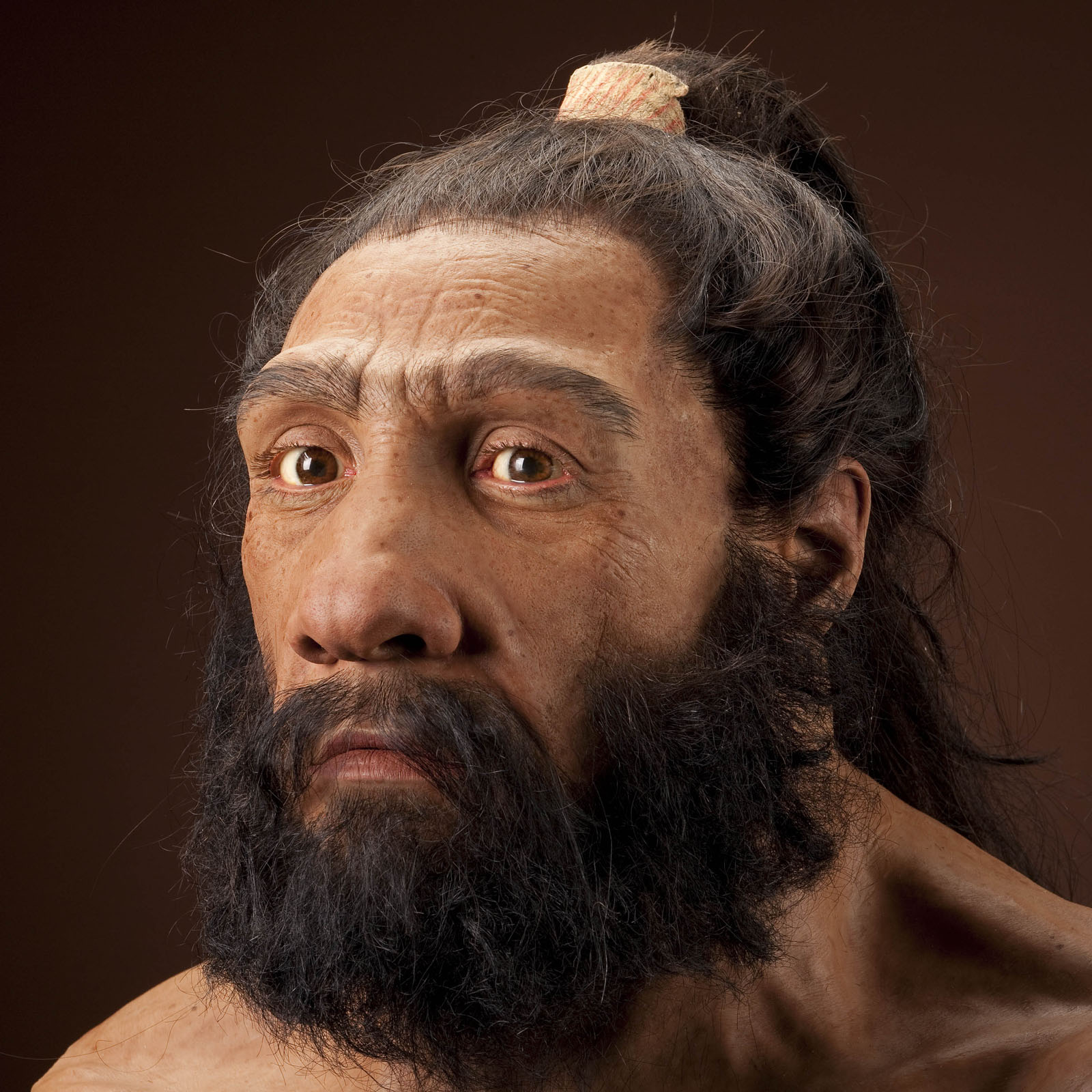 Reconstruction of close evolutionary cousins, Neanderthals, based on the skull from Shanidar 1, Iraq.  Artwork: John Gurche. Image credit: Human Origins Program, Smithsonian.
