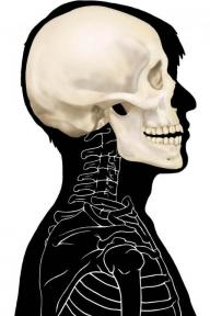 Image of modern human silhouette with bones
